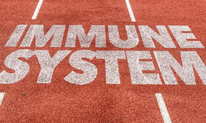 Immunity probiotics