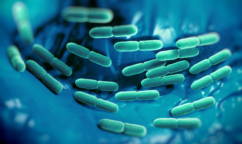 Sports nutrition and probiotics report